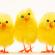 Easter Service Arrangements